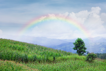 lonelyness: Lonely tree in mountain with rainbow, Composition of nature, Copyspace For Text Stock Photo