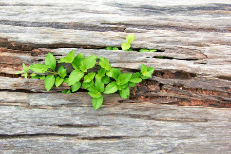 Young Plant Growing On The Old Wooden Tree, New Life Idea Concept With Seedling Growing (Tree), Growing Concept.