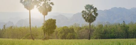 Beautiful Green Rice Field With Palm Trees Blue Sky In The Mountain Background, Banner for advertising