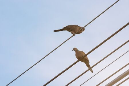 Two Pigeons On The Power Line, The Birds Are Free.