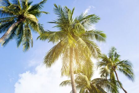 Coconut palm trees, beautiful tropical background Stok Fotoğraf