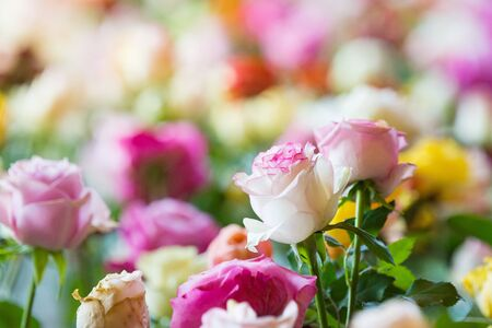 Flowers Wall Background With Amazing Multicolor Roses, Wedding Decoration, Retro Filter Tone.