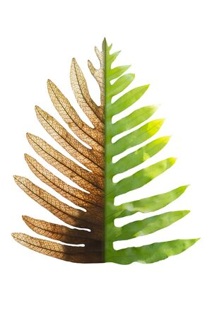Concept Of Climate Has Changed, Half Alive And Half Dead Fern, Save The World, Save The Environment. Stock Photo
