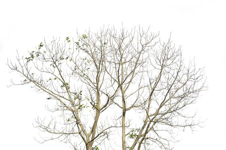 Trees isolated on white background, tropical trees isolated used for design, advertising and architecture.