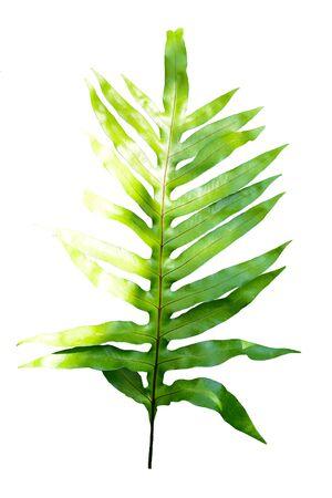 Fern Leaves On White Background. Stock Photo