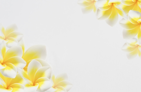 tropical border: Frangipani Spa Flowers border , Plumeria flower on white background