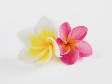 Frangipani Spa Flowers border , Plumeria flower photo
