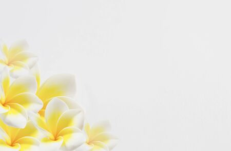 Plumeria flower on white background , Frangipani  Flowers border photo