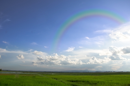 Landscape shot of a paddy field on a sunny day with blue sky and white clouds and rainbow photo