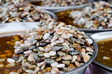 vittatus: Preserved Razor clam ready for sale in market
