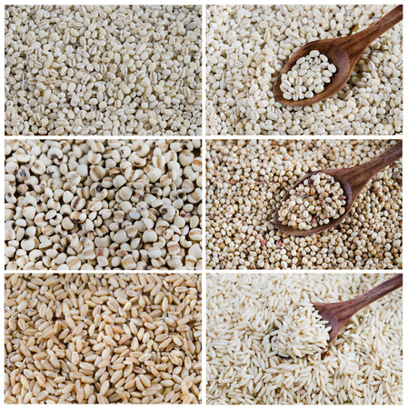 Collage from photographs of  grains ,   chinese pearl baley, rice, wheat , barley   photo