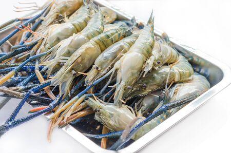 macrobrachium: giant  river prawn is ready to grill ( Macrobrachium rosenbergii )