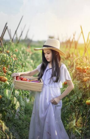 Asian cute little girl with red tomatoes, harvesting fresh vegetables in garden