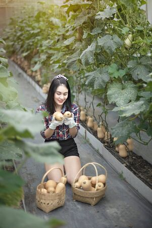 Asian pretty woman in a greenhouse with butternut squash, harvesting fresh vegetables