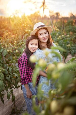 Asian happy family with red tomatoes, harvesting fresh vegetables in garden