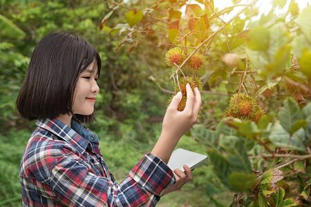 Asian woman checking report organic fruit in orchard , agriculture business, healthy food concept