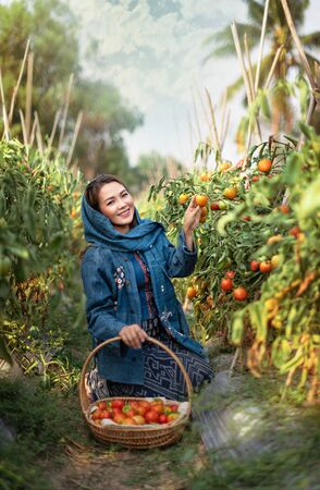Asian pretty woman with red tomatoes, harvesting fresh vegetables in garden
