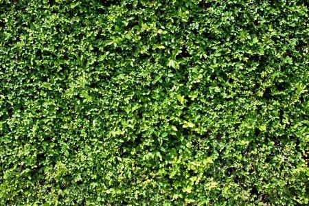 Plant wall photo
