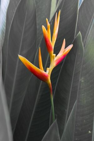 bird of paradise photo