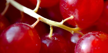 close up red grape skin background