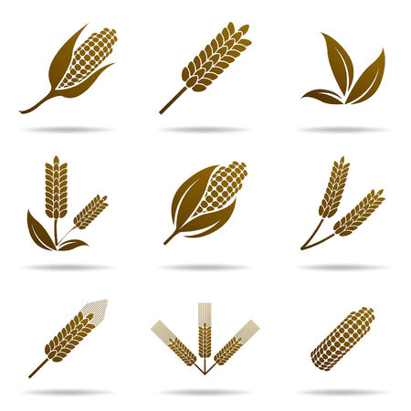 corn crop: Wheat and corn icons - Illustration Illustration