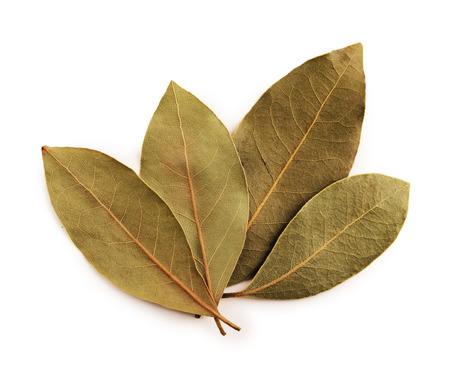 Bay leaves with clipping path Stock Photo