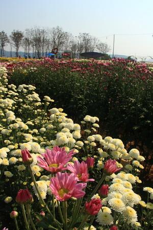 jardines con flores: Un cuadro de flores amante Foto de archivo