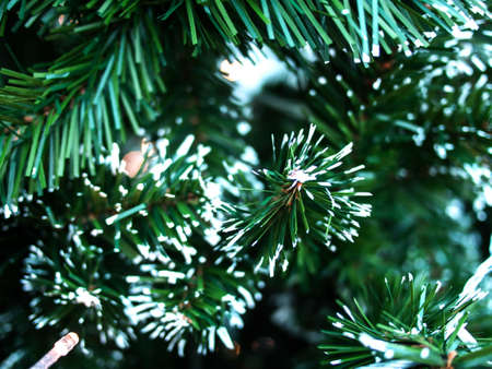 closedup: Closed-up christmas tree leaves Stock Photo