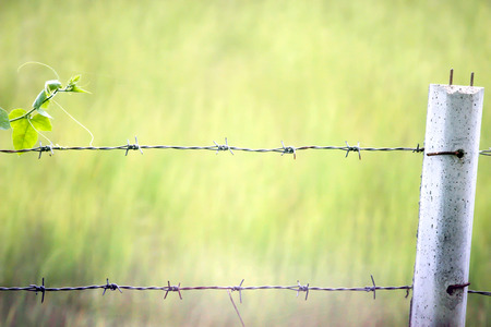 cattle wire wire: Wire Fence with space for background