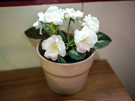 キッチンの窓の近く白い植木鉢 写真素材