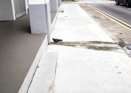 都市の黒鳩コンクリートの床の上を歩く