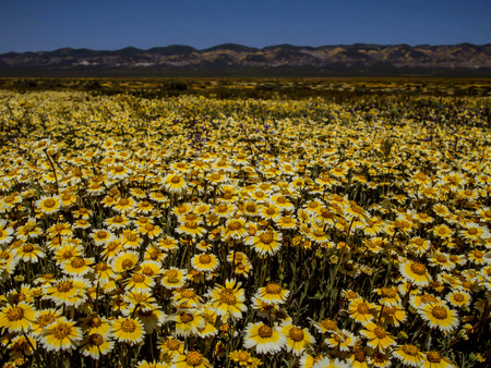 Wild flower field blooming in National park nature