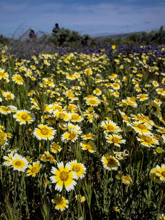 Flower field blooming in National park nature California Reklamní fotografie