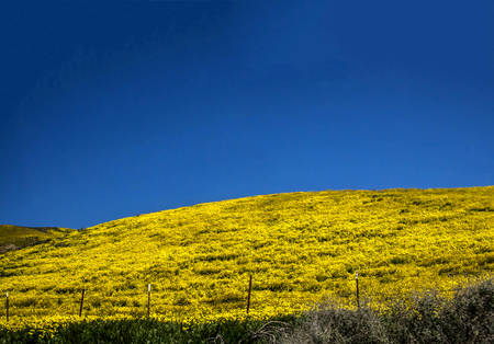 Flower field mountain during spring in California Carrizo plains