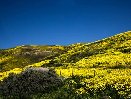 カリフォルニア カリーゾ平原春花フィールド山