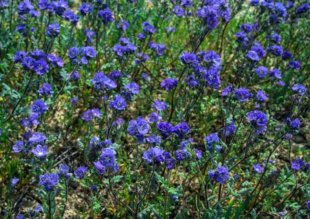 自然のフィールドで紫色の野生花