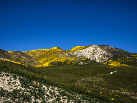 カリフォルニア州で野生の黄色い花の咲くフィールドで覆われている山 写真素材