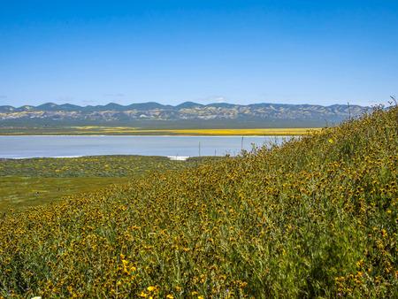 カリゾ平原カリフォルニア州花
