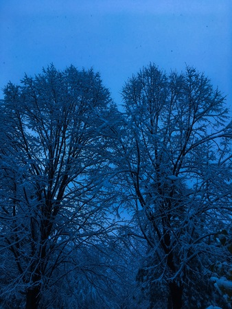 Nature landscape background in the winter, trees under snow at night Stock Photo