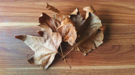 Autumn nature photo with leaves and wood background