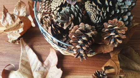 Autumn nature photo with chestnuts, leaves and pinecone