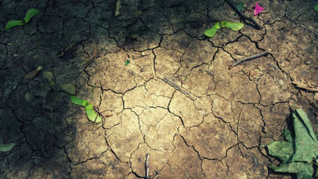 Dry ground with green leaves fall from the tree with sunrays photo Foto de archivo