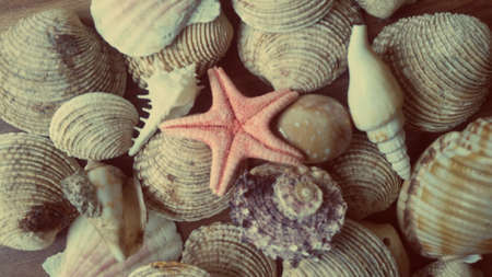 Sea star with shells. Close up summer holiday photo background.