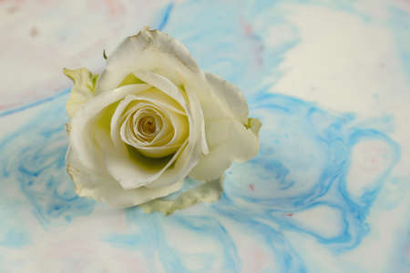 Abstract swirls of acrylic paints with a rose