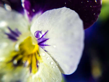 Flowers in macro shot with water droplets 스톡 콘텐츠