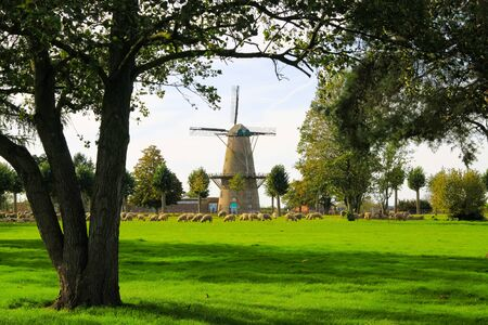 View beyond trees over green meadow with sheep herd on ancient windmill in autumn - Xanten, Germany