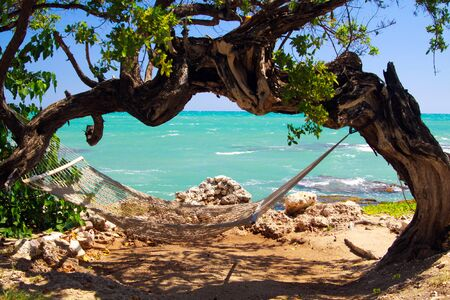 Isolated empty Hammock under twisted arched crooked tree with turquoise rough ocean, Jamaica