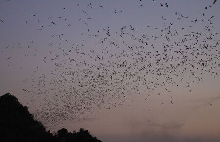 Hpa An (Hpa-An) Cave, Myanmar: Countless Bats swarming out in the evening dusk