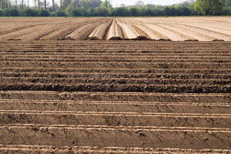 View on plowed tilled cropland with symmetrical vertical and horizontal furrows in Netherlands near Roermond