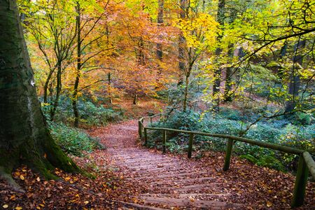 View on path covered with foliage in german beech forest in autumn colors - Viersen (Suechteln), Germany